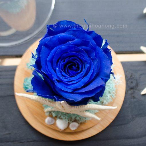 Hoa hồng xanh vĩnh cửu