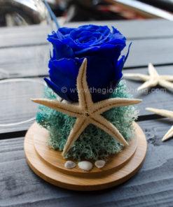 Kết hợp từ sao biển và ốc biển tôn vinh vẻ đẹp của hoa hồng xanh