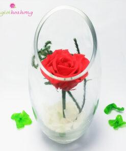 Bình thủy tinh hoa hồng đỏ vĩnh cửu
