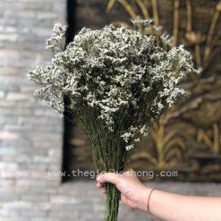 Bó hoa sao trắng