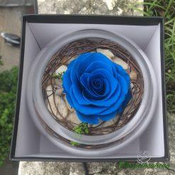 Cốc hoa hồng xanh vĩnh cửu