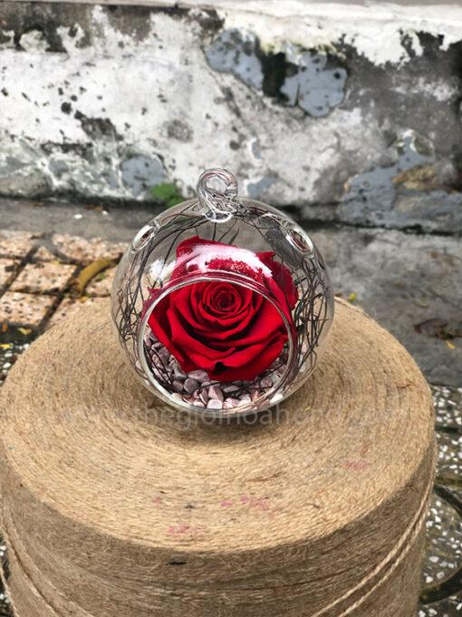 Hoa Hồng đỏ vĩnh cửu Dream Lover - RED02