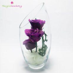 Bình thủy tinh hoa hồng tím vĩnh cửu