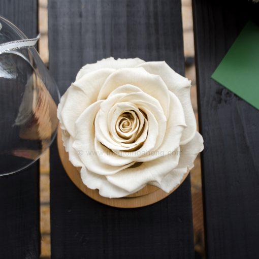 Hoa Hồng trắng vĩnh cửu