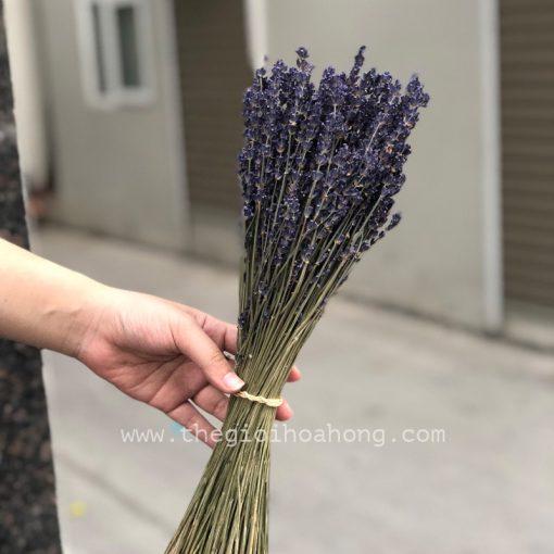 Bó hoa lavender khô nhập Pháp