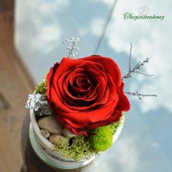 Only Love - Hoa Hồng đỏ vĩnh cửu