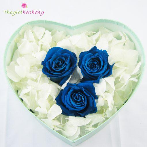 Hộp tim hoa hồng xanh vĩnh cửu