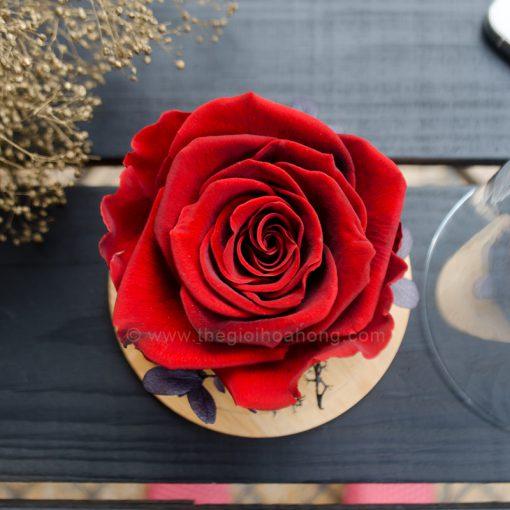 Là Em - Hoa hồng đỏ vĩnh cửu