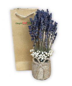Lọ hoa lavender - Tình yêu nhỏ