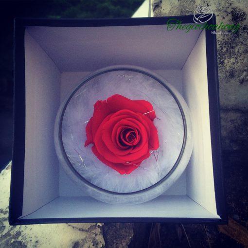 Lọ thuỷ tinh hoa hồng đỏ