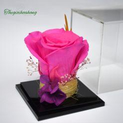 Love Box - Hoa hồng cánh sen