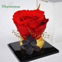 Love Box - Hoa hồng đỏ vĩnh cửu