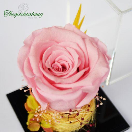 Love Box - Hoa hồng phấn vĩnh cửu