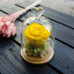 Tỏa Nắng - Hoa hồng vàng vĩnh cửu