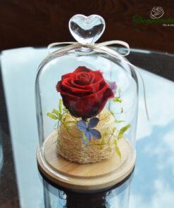 True Love - Hoa Hồng đỏ vĩnh cửu