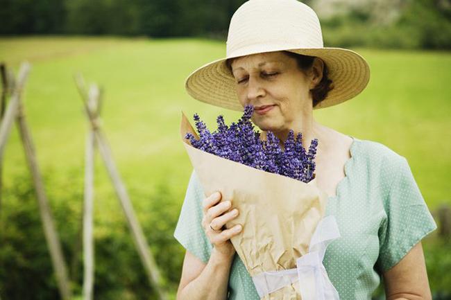 Ý nghĩa của hoa oải hương - lavender là gì