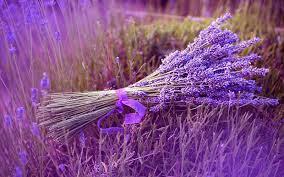 Lavender bó