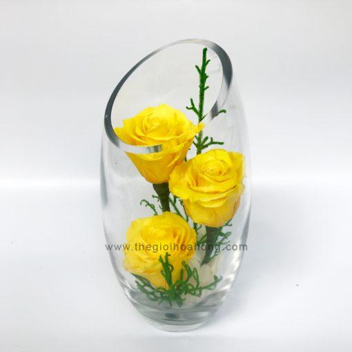Bình hoa hồng vĩnh cửu - Ấm Áp