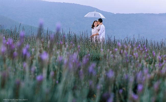 Vẻ thơ mộng tại cánh đồng hoa oải hương Đà Lạt