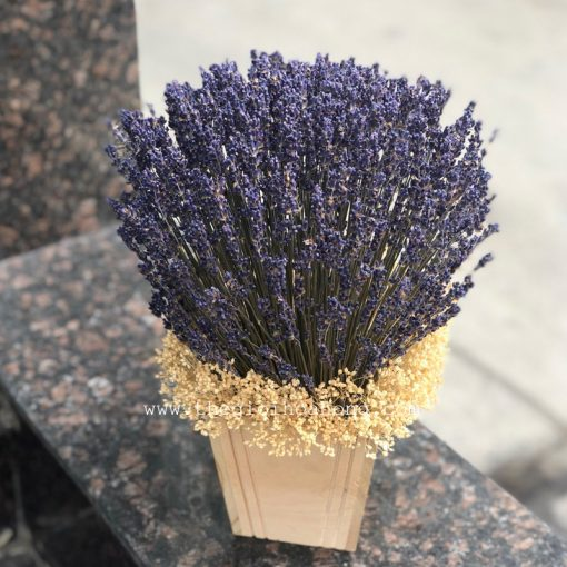 Hộp gỗ hoa oải hương khô nhập Khẩu Pháp