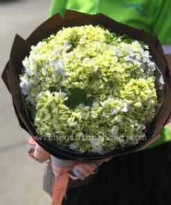 Bó hoa cẩm tú cầu - Gửi lời xin lỗi
