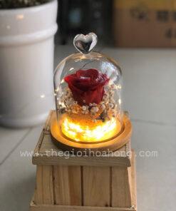 Glass Dome hoa hồng vĩnh cửu - Ngọn Lửa Tình