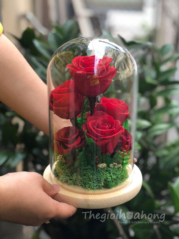 Glass Dome 7 hoa hồng đỏ vĩnh cửu