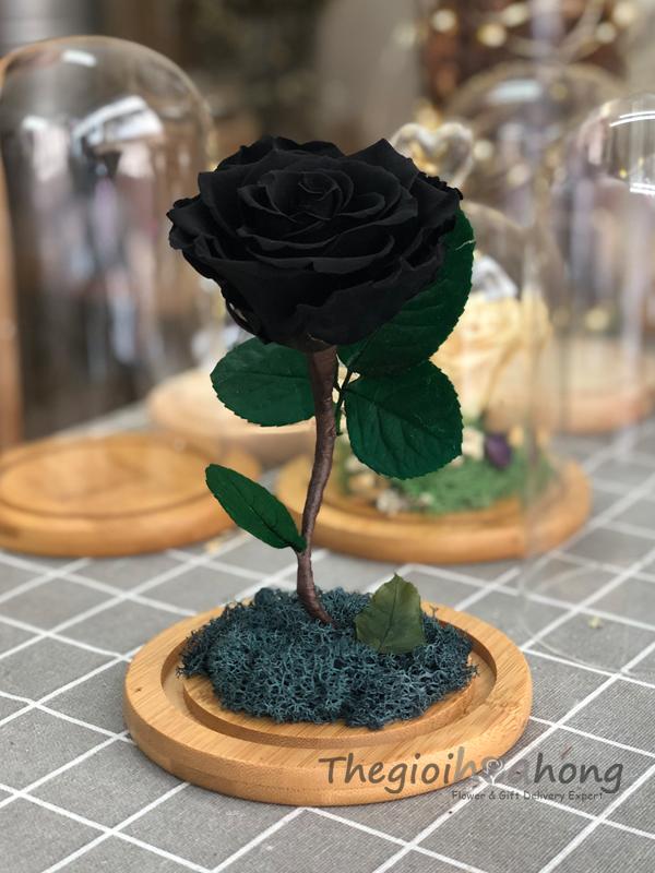 Glass Dome hoa hồng đen vĩnh cửu