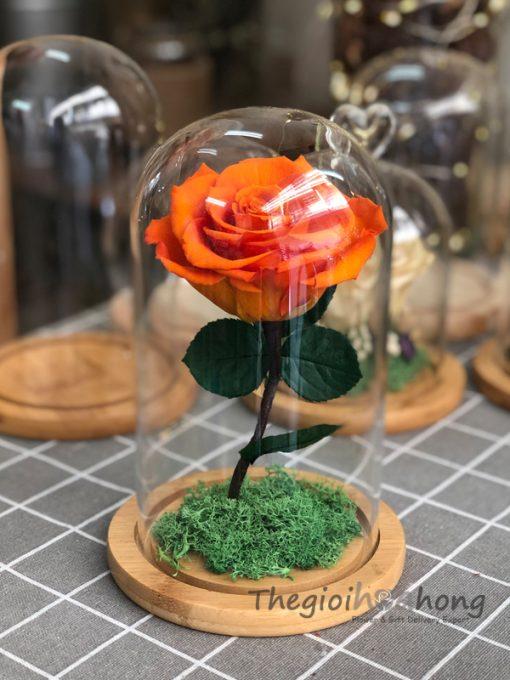 Glass Dome hoa hồng vĩnh cửu