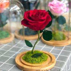 Glass dome hoa hồng đỏ vĩnh cửu My Everything
