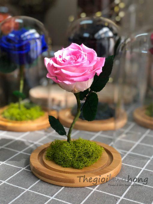 Glass dome hoa hồng vĩnh cửu My Everything