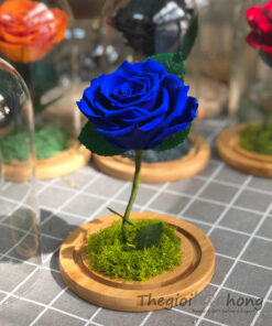 "Glass dome hoa hồng xanh vĩnh cửu My Everything ""Preserved blue rose"""