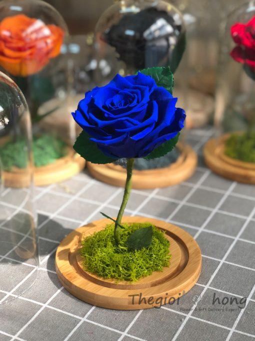 """Glass dome hoa hồng xanh vĩnh cửu My Everything """"Preserved blue rose"""""""