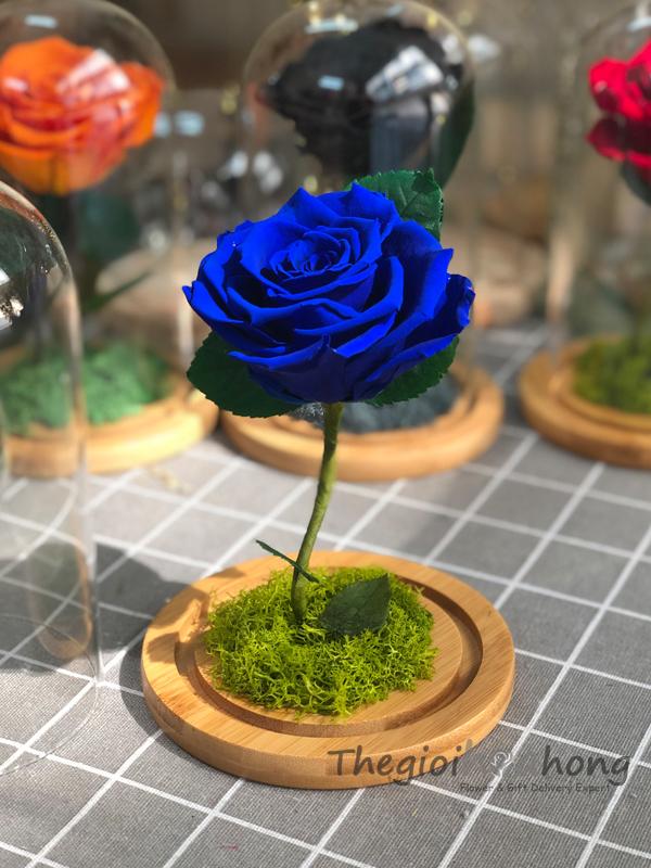 Glass dome hoa hồng xanh vĩnh cửu My Everything