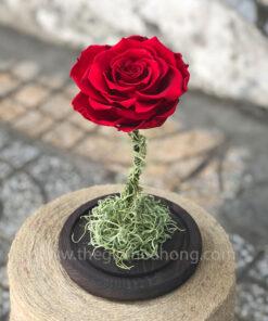 Hoa hồng đỏ vĩnh cửu My Everything - RED02