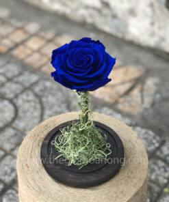 Hoa hồng xanh My Everything - BLU03