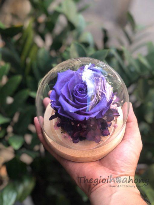 Vòm thuỷ tinh hoa hồng tím vĩnh cửu - Sweet Violet