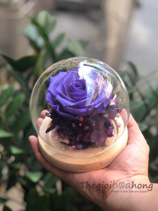Sweet hoa hồng tím vĩnh cửu