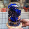 Glass Dome hoa hồng xanh - Love Magic