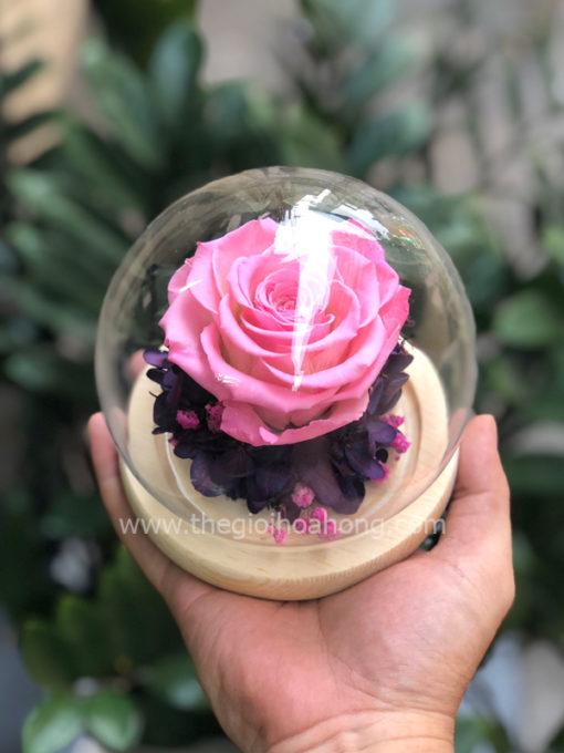 Glass Dome hoa hồng vĩnh cửu - Sweet Pink