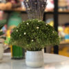 Green Garden - Lọ hoa Broom Bloom khô