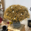 Warm Autumn Evening - Lọ hoa Broom Bloom khô