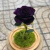 Glass Dome hoa hồng tím vĩnh cửu - Royal