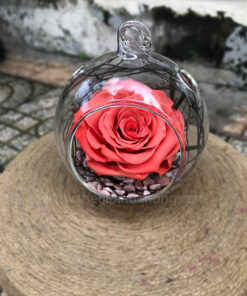 Hoa hồng cam vĩnh cửu Dream Love - BIC10