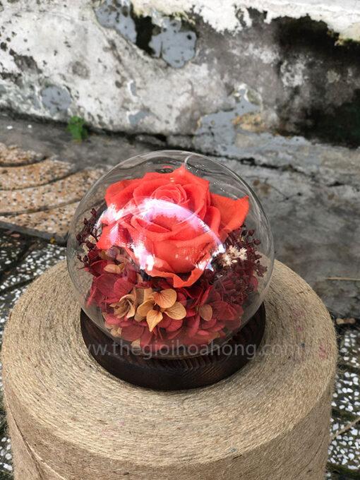 Hoa hồng vĩnh cửu SWEET - BIC10