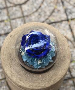 Hoa hồng xanh Sweet – BLU03