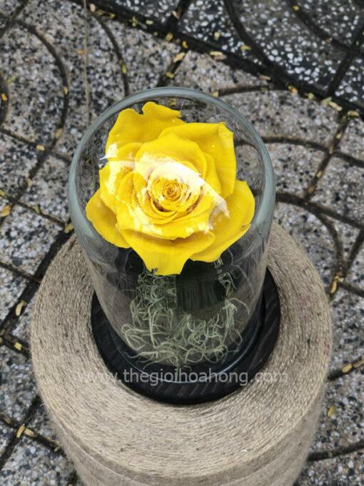 Hoa hồng vàng vĩnh cửu My Everything - YEL02