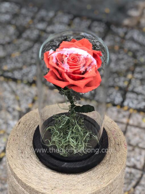 Hoa hồng vĩnh cửu My Everything - BIC09