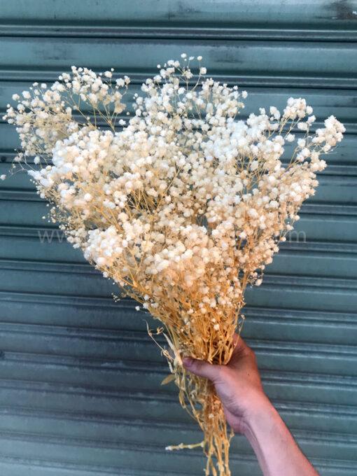 Bó hoa baby khô trắng