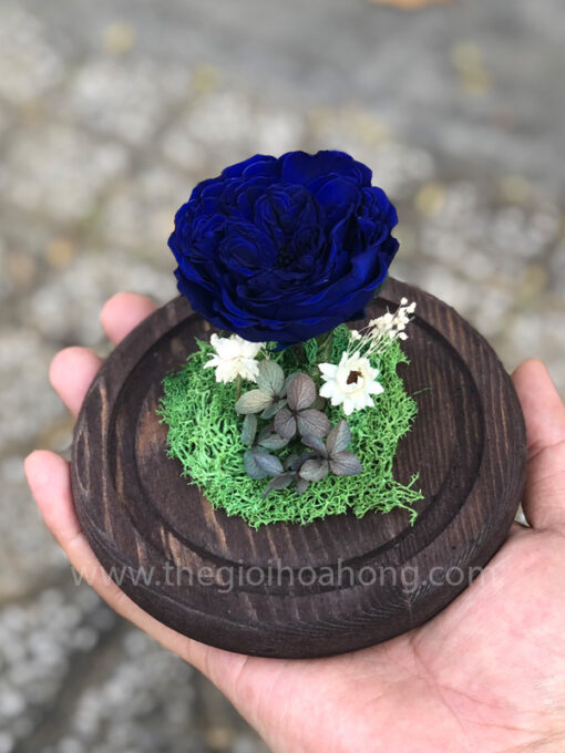 Hoa hồng xanh A Little Love - BLU03